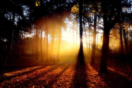 High Park Sunbeams