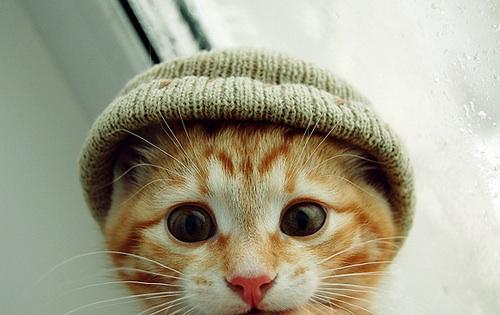 Kitteninahat