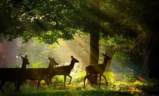 Nature Photography: Alex Saberi 11