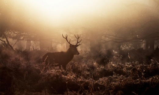 Nature Photography: Alex Saberi 15