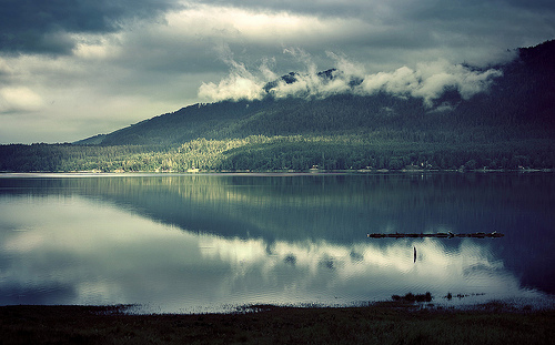 On Lake Quinault ii