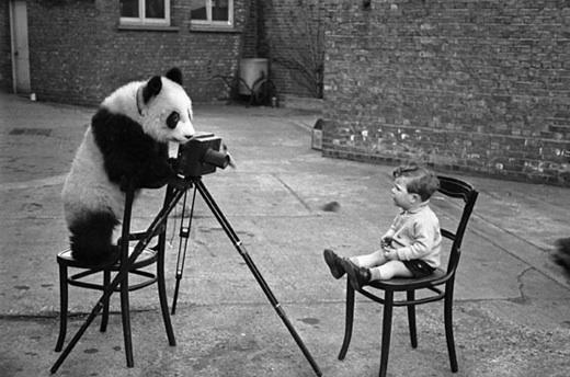 pandaphotography