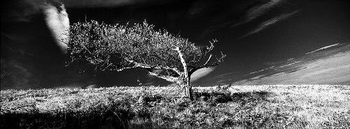 Phantomtree