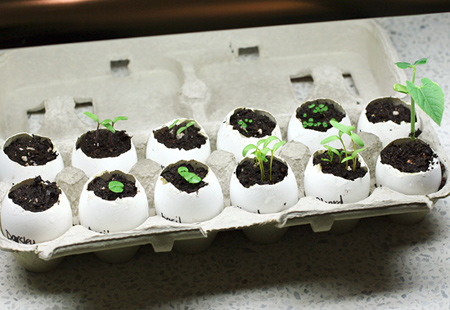 Seedlings 3