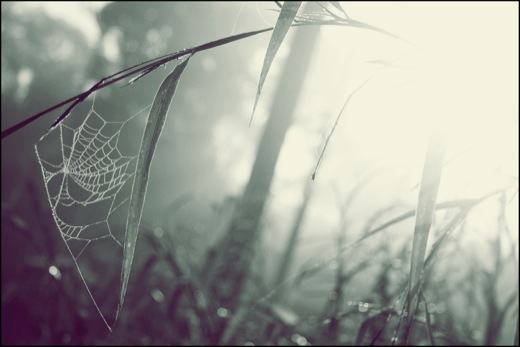 Spider Web in the Sun